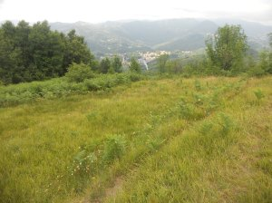 Pianoro che s'incontra in direzione di Scoffera (sullo sfondo Laccio, versante nord)