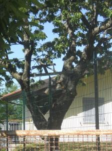 L'albero del giardino di Villa Casa Nostra: Dargos di Titania?