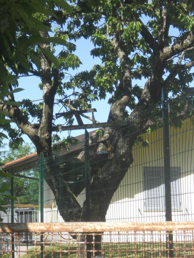 L'albero dl giardin di Villa Casa Nostra: Dargos di Titania?